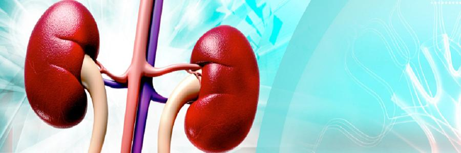 A Specialist Treatment to Fight Kidney Failure Diseases