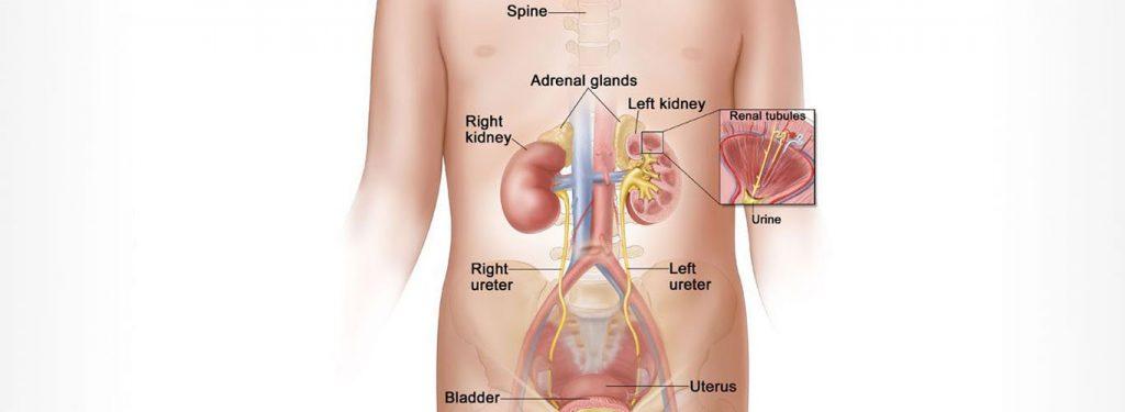 Kidney specialist in delhi