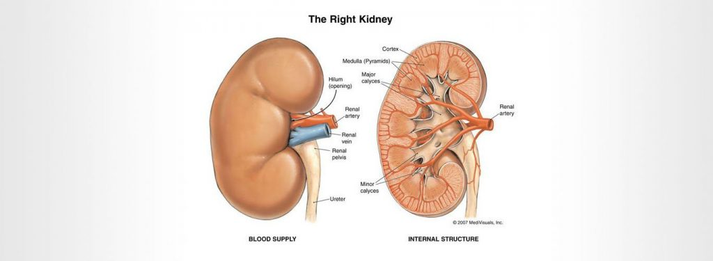 Kidney Transplant in India, Nephrologist in Delhi - Dr. Sunil Prakash